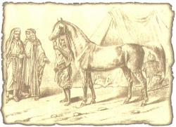 Аравитяне